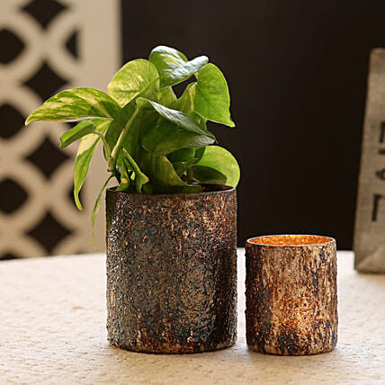 Money Plant in Beautiful Glass Vase:Send Gifts to Fatehpur