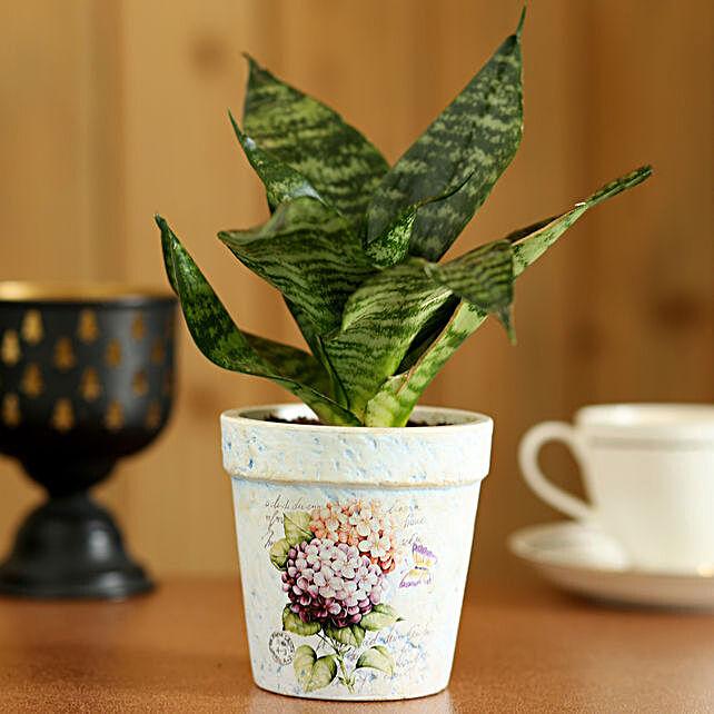 Sansevieria Hahnii In Ceramic Pot:Send Gifts to Tehri Garhwal