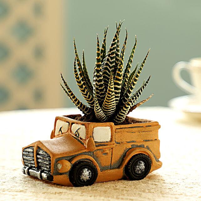 Haworthia Plant In Yellow Pot:Succulents and Cactus Plants