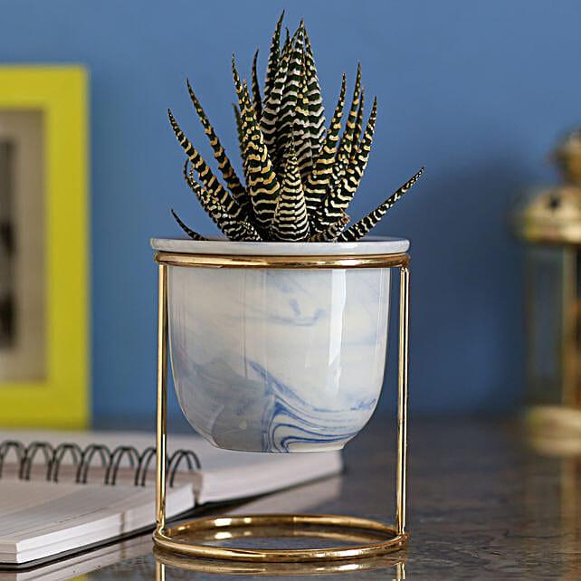 Howarthia Zebra Designer Blue Ceramic Pot