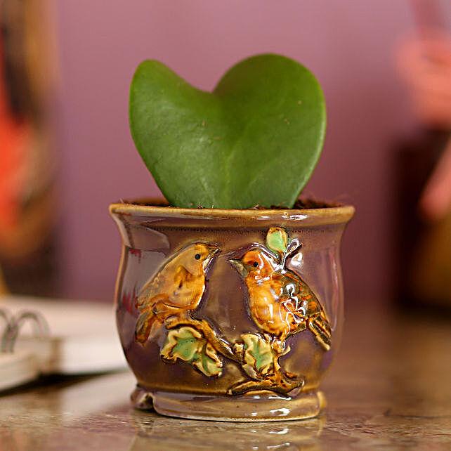 Hoya Plant In Ceramic Brown Pot