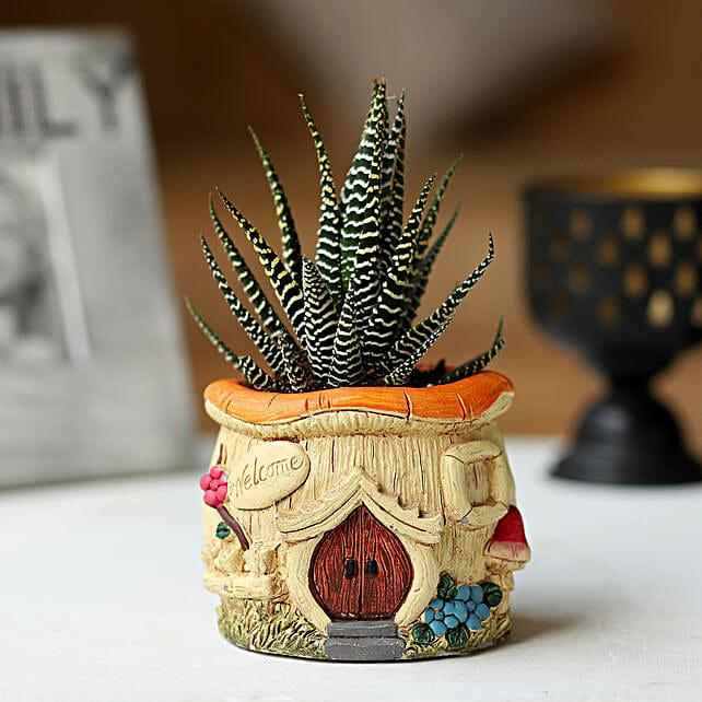 Haworthia Plant in Small Pot