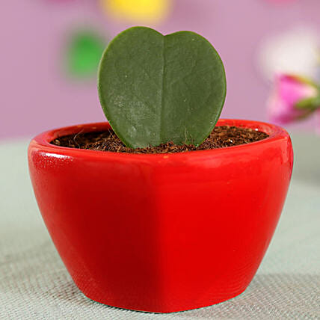 hoya plant in heart shape pot online