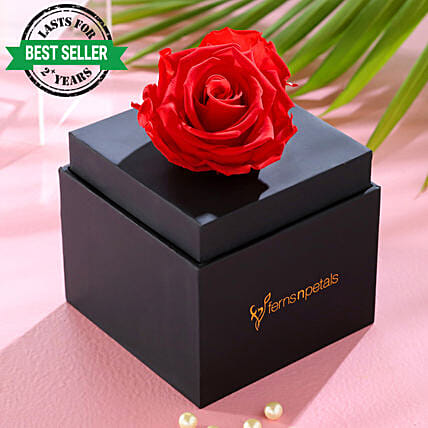infinity rose in black box online
