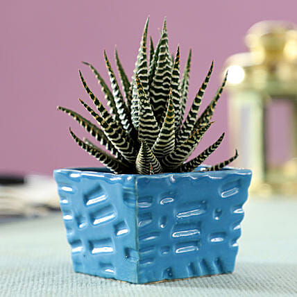 small plant for home décor