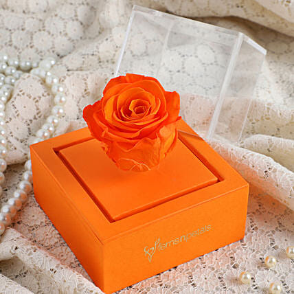 forever rose in box online