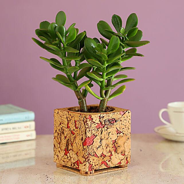 Indoor Plant In Cork Pot Online