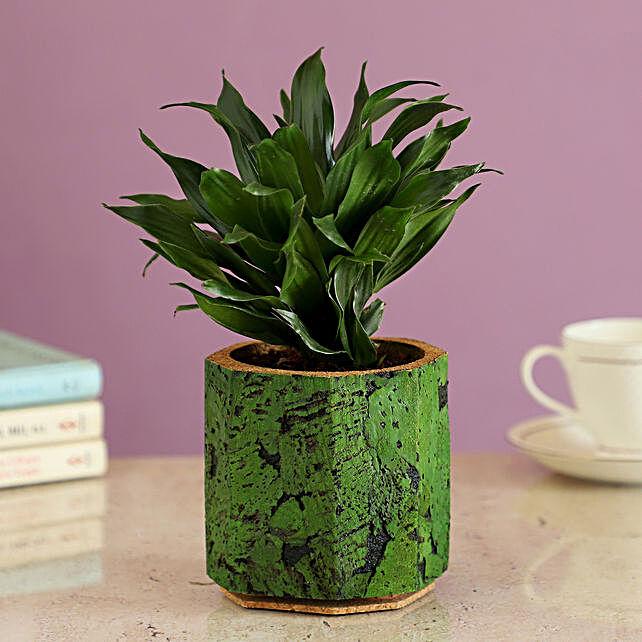 Plant In Green Cork Pot