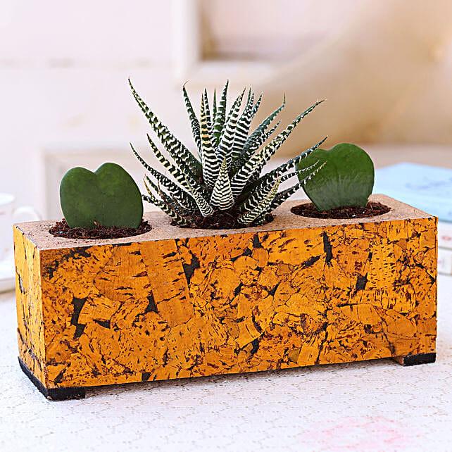 Plants In Cork Planter Set Online