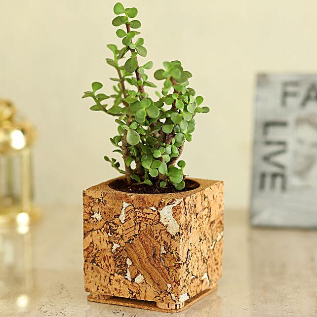 Jade Plant In Pretty Planter:Cork Planters
