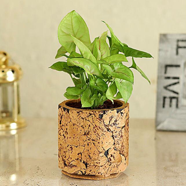 Plant In Hexa Shaped Pot Online