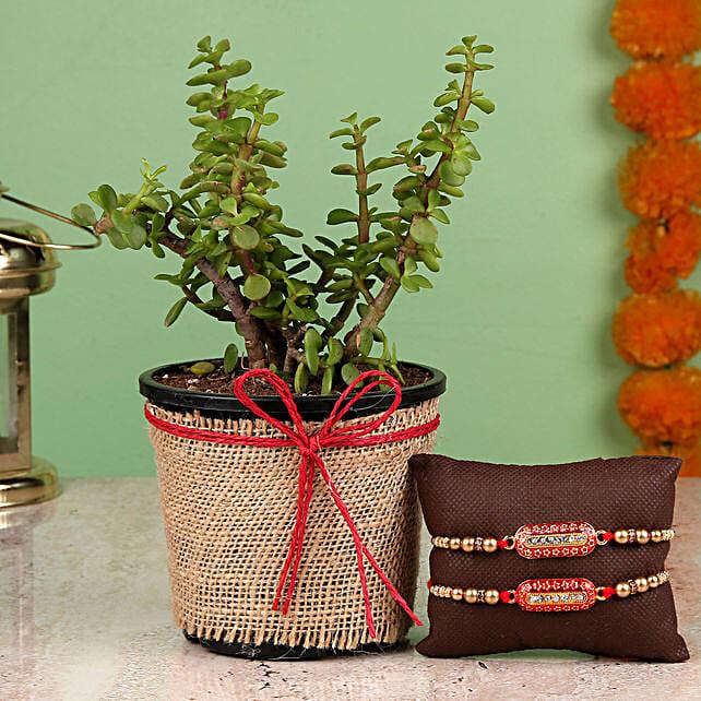 Jade Plant & Capsule Rakhi Set