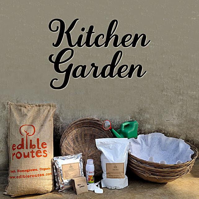 Spinach & Lobia Kitchen Garden Baskets:Plants Diy kits