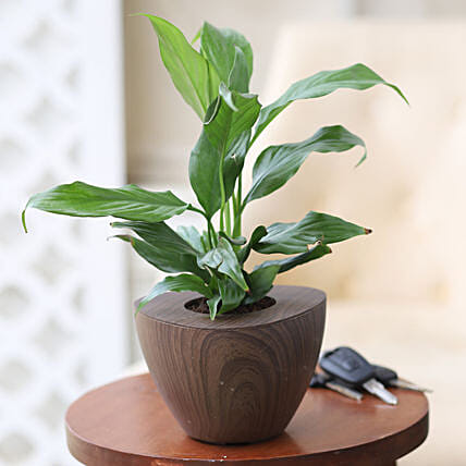 Online Peace Lily Plant:Wooden Planters
