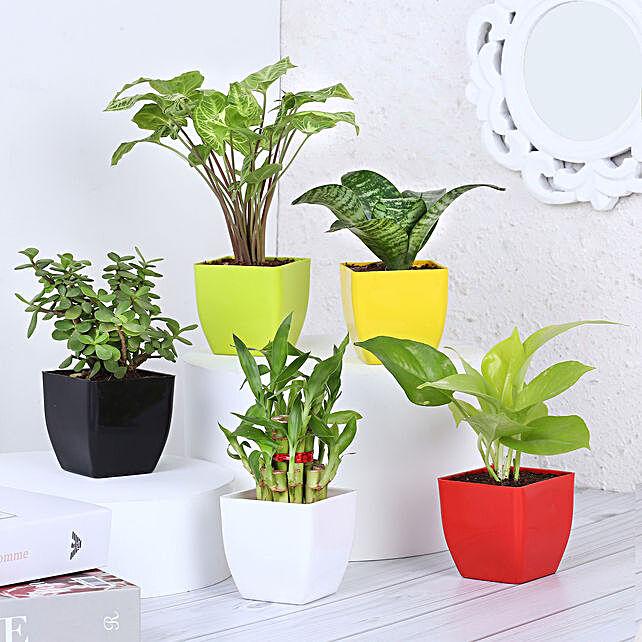 Order Online Plant Set