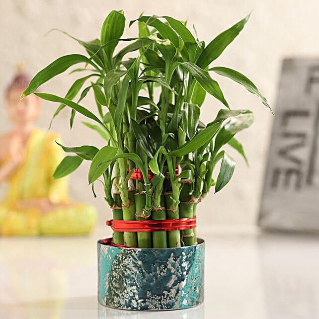 online home decor indoor plant