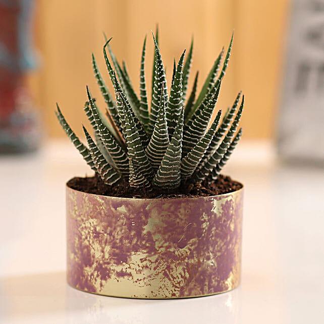online plant for desk