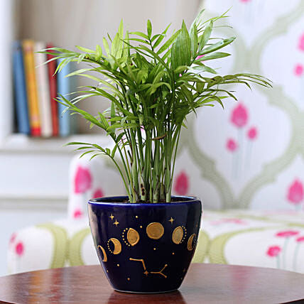 Chamaedorea Plant in Phases of Moon Blue Pot