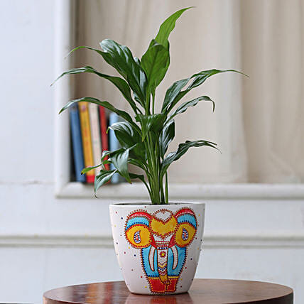 Peace Lily Plant in Hand painted Ceramic Planter