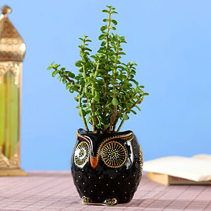 Adorable Jade Plant in Hand painted Owl Planter