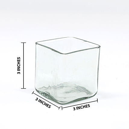 Online Square Glass Vase:Glass Planters Delivery