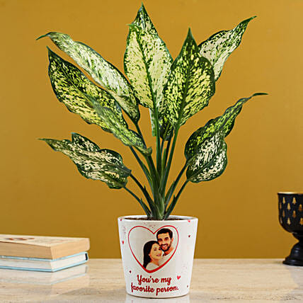 Silver Aglaonema Plant In Personalised Pot