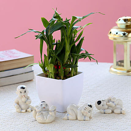 Bamboo Plant with Set of Baby Buddhas:Gifts for Basant Panchami
