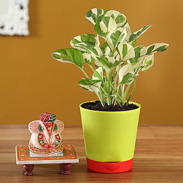ganesha idol n pothos plant  combo online:Plant Combos