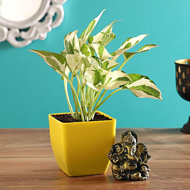 Ganesha Idol White Pothos Plant Combo