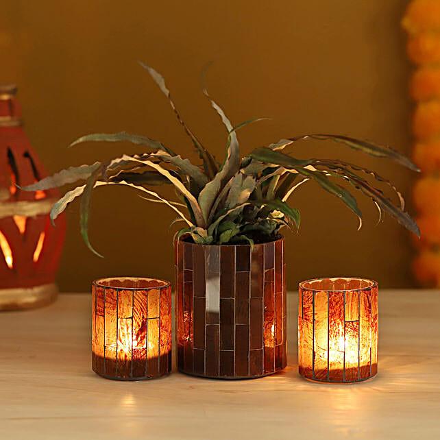 Cryptanthus Plant Brown Votives Set