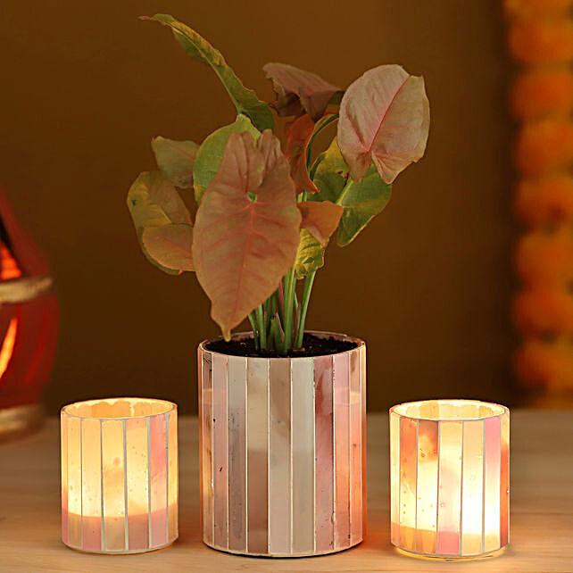 Pink Syngonium Peach Votives Set