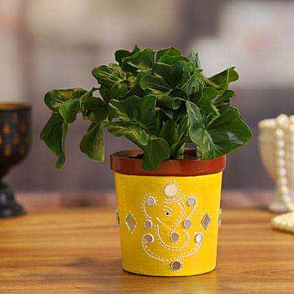 Philodendron Plant in Yellow Terracotta Pot