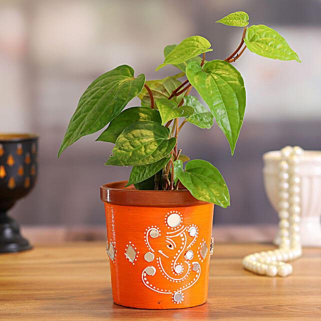 Betel Leaf Plant in Orange Terracotta Pot:Terracotta Planters