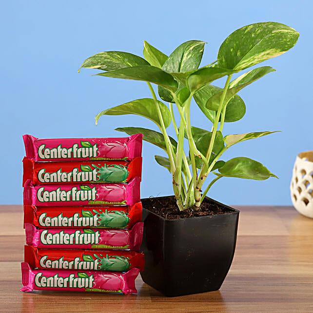 money plant center fruit candy combo