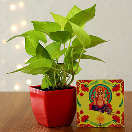 Online Plant And Spritual Gifts
