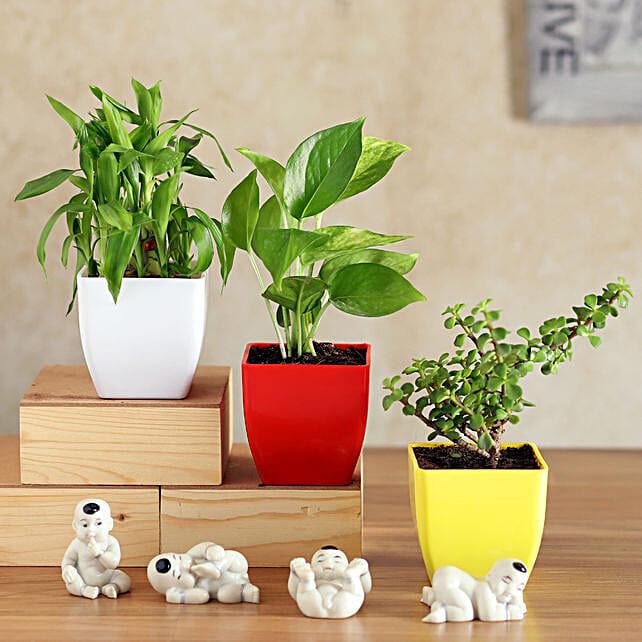 Lucky Plants with Mini Budhhas