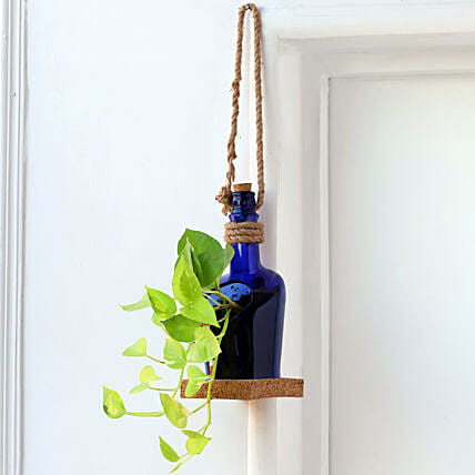 Hanging Money Plant In Antiquity Bottle Planter with Coaster