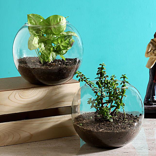 Set Plant in round vase