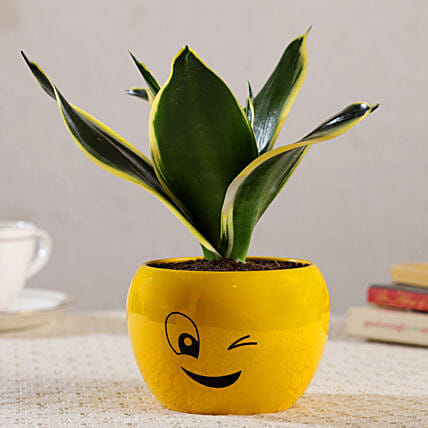 MILT Sansevieria Plant In Wink Emoji Printed Pot:New Arrival-gifts for Her