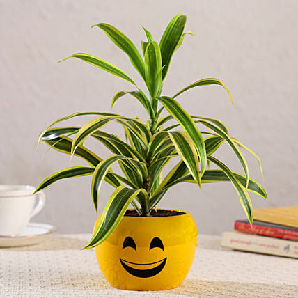 Song Of India Plant In Emoji Printed Yellow Pot