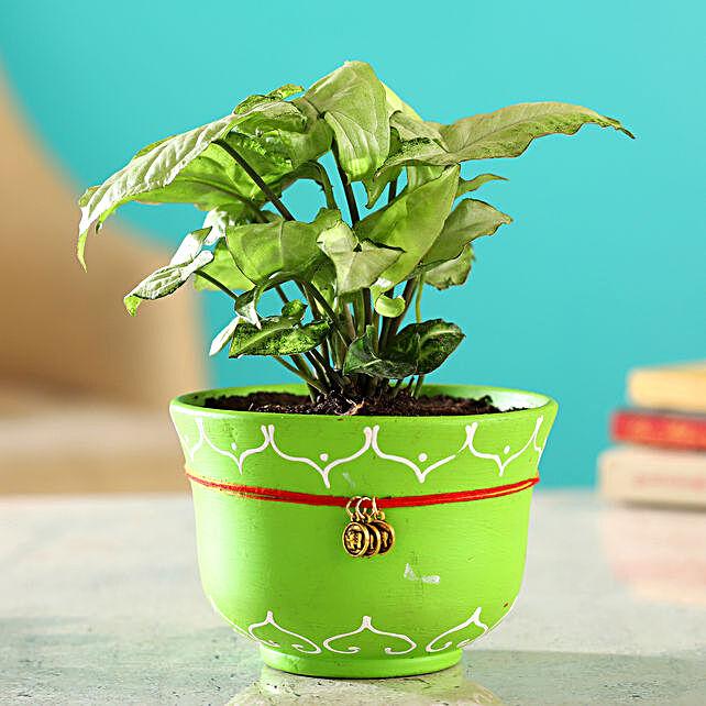 Synognium Plant In Green Handmade Terracotta Bowl