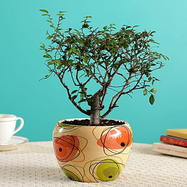 Ulmus I Shape Bonsai In Abstract Design Beige Pot
