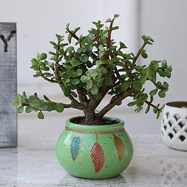 Jade Plant in Dream Catcher Ceramic Pot