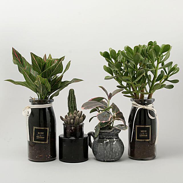 premium plant combo online