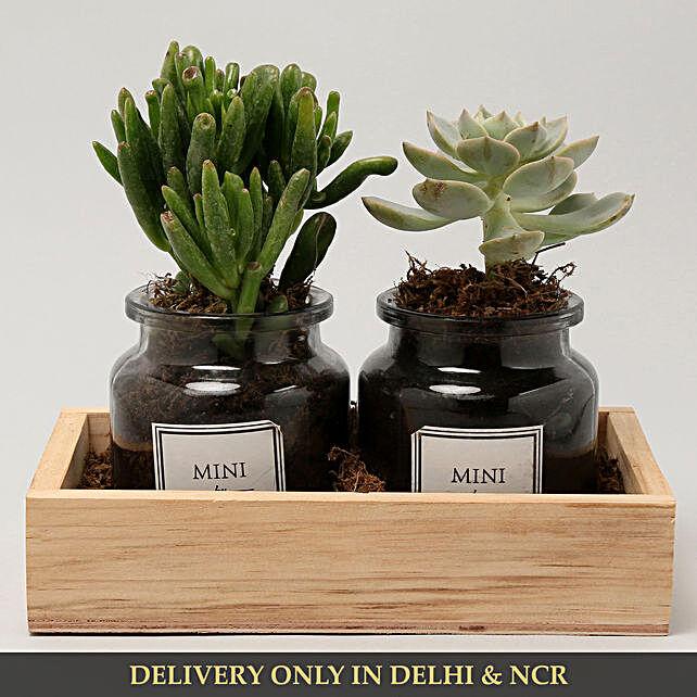 premium plant arrangement in get well soon