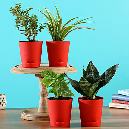Air Purifying Plants in Self Watering Pots