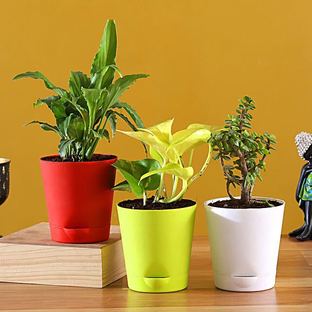 Buy Plants Set With Pots