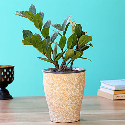 Plant Gift in Self-watering Pot Online