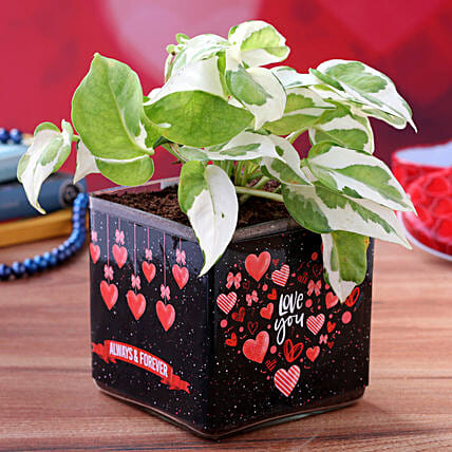 White Pothos Plant in Valentines Glass Vase