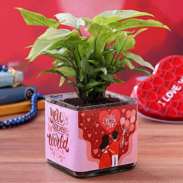 Syngonium Plant in Valentines Glass Vase